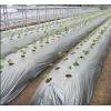 Линия для производства биоразлагаемых изделий.