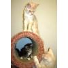 Котята Мейн куны из питомника- выгодное предложение